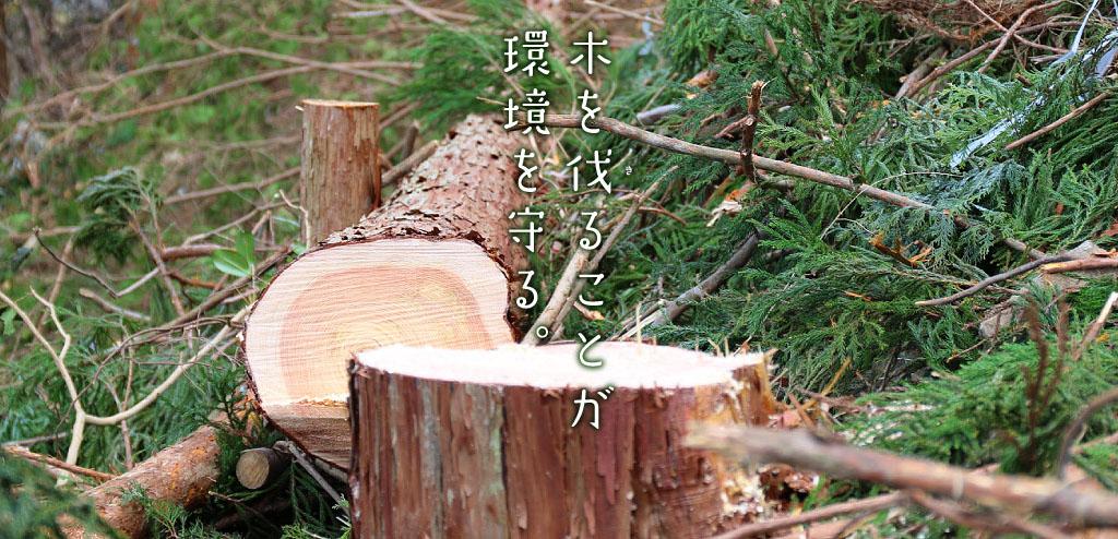 木を伐ることが環境を守る。